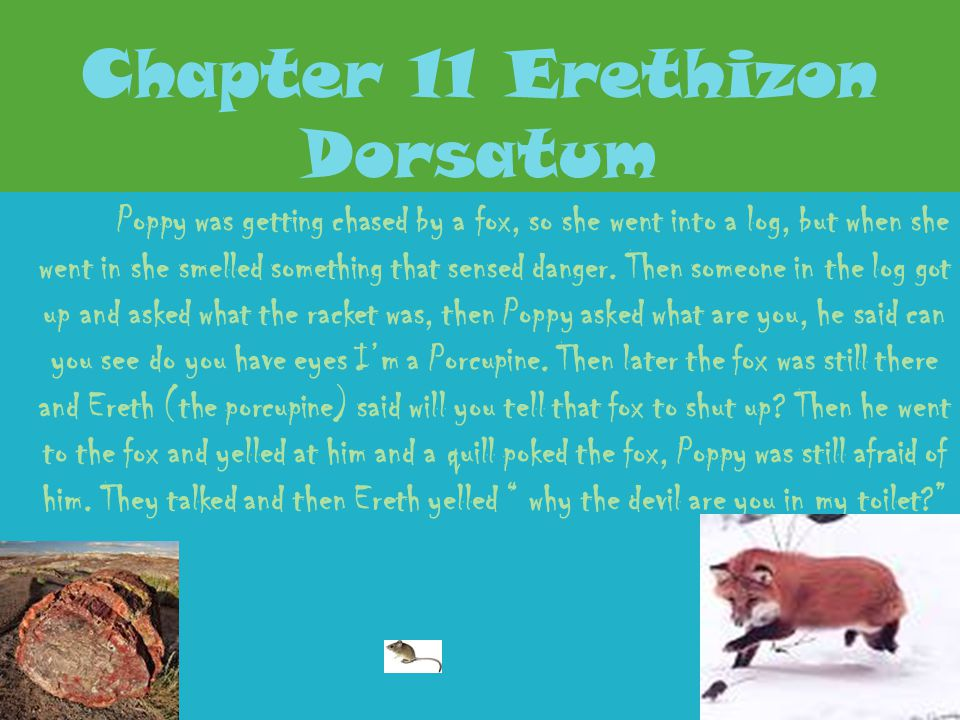Chapter 11 Erethizon Dorsatum