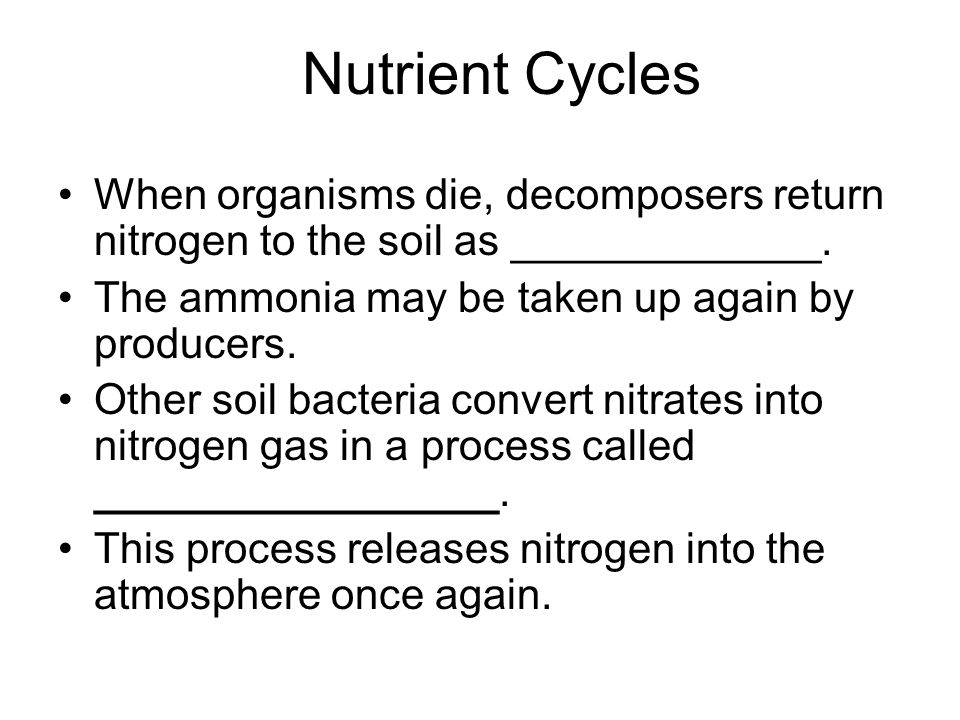 Nutrient Cycles When organisms die, decomposers return nitrogen to the soil as _____________. The ammonia may be taken up again by producers.