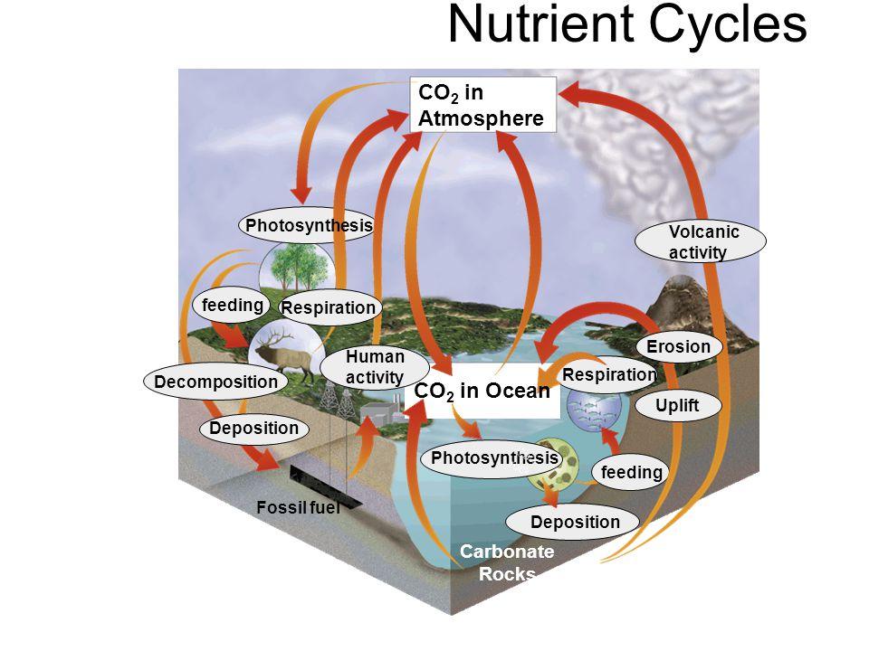 Nutrient Cycles CO2 in Atmosphere CO2 in Ocean Carbonate Rocks