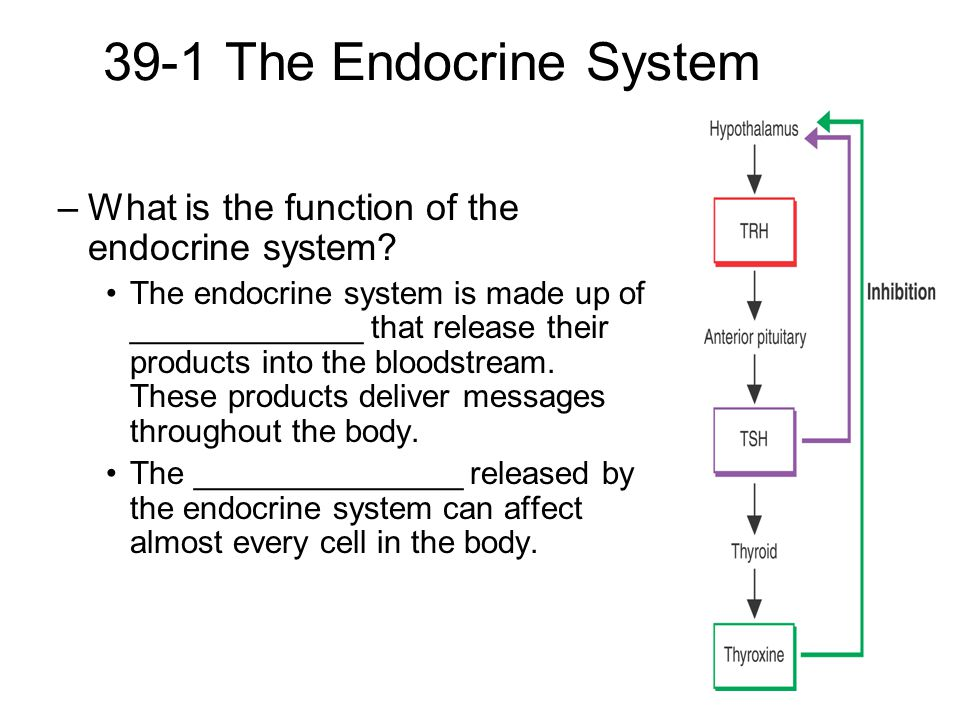 39-1 The Endocrine System What is the function of the endocrine system