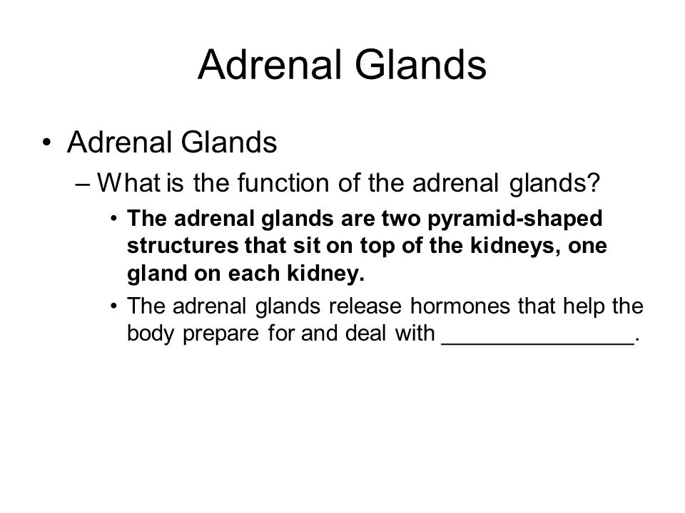 Adrenal Glands Adrenal Glands