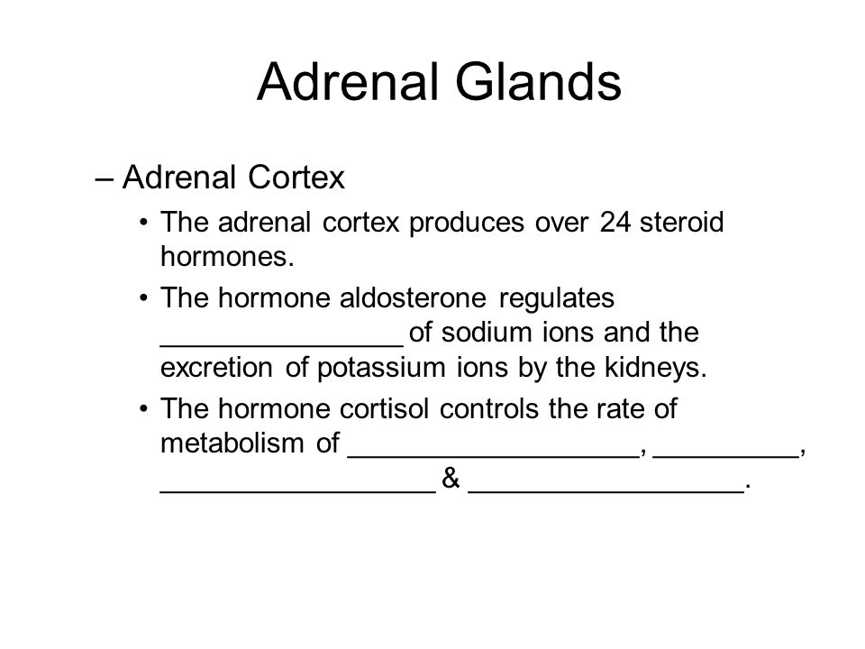 Adrenal Glands Adrenal Cortex
