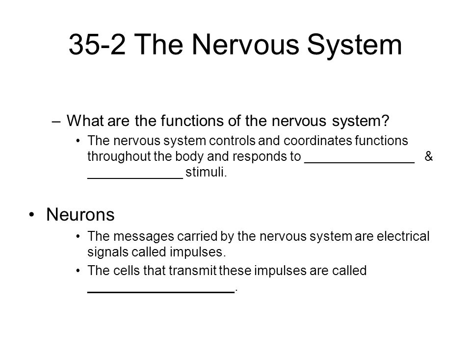 35-2 The Nervous System Neurons