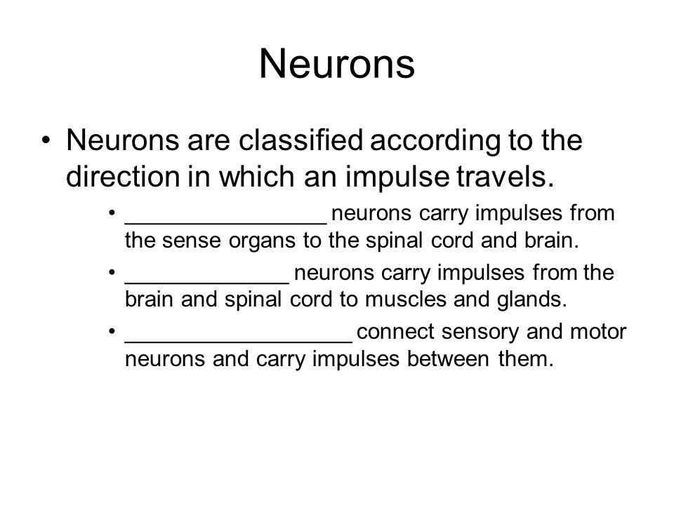 Neurons Neurons are classified according to the direction in which an impulse travels.