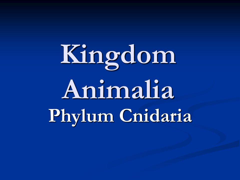 Kingdom Animalia Phylum Cnidaria
