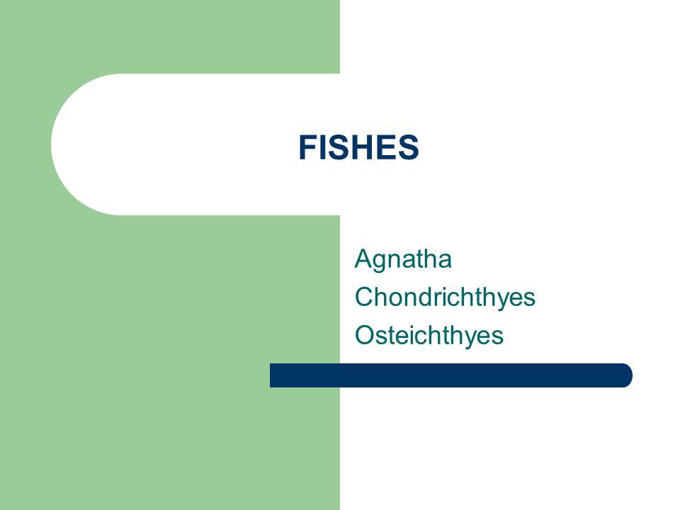 Agnatha Chondrichthyes Osteichthyes
