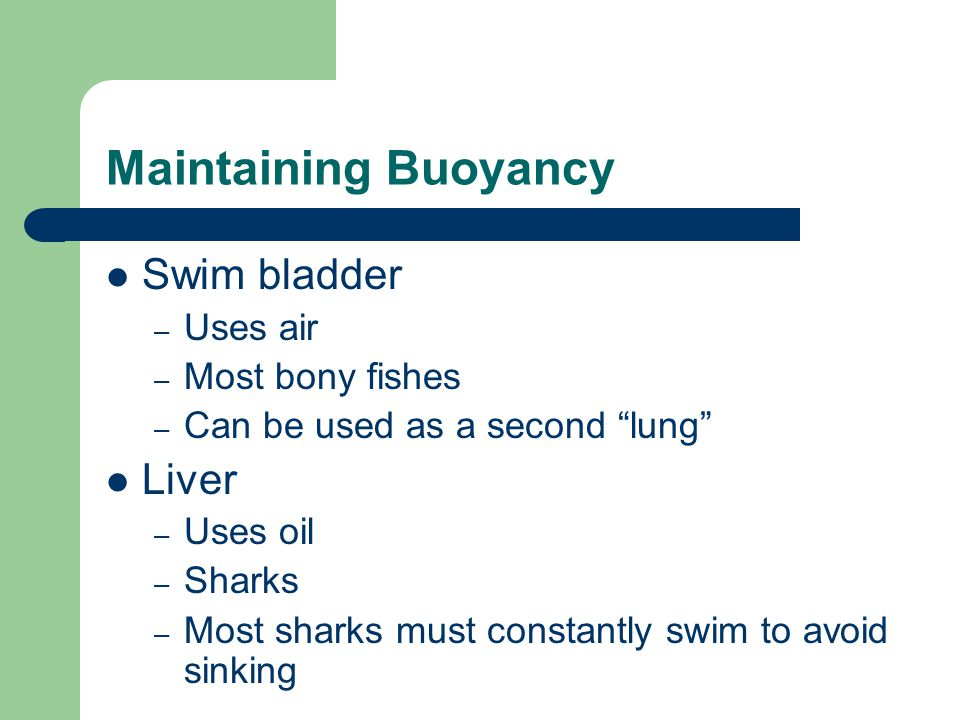 Maintaining Buoyancy Swim bladder Liver Uses air Most bony fishes