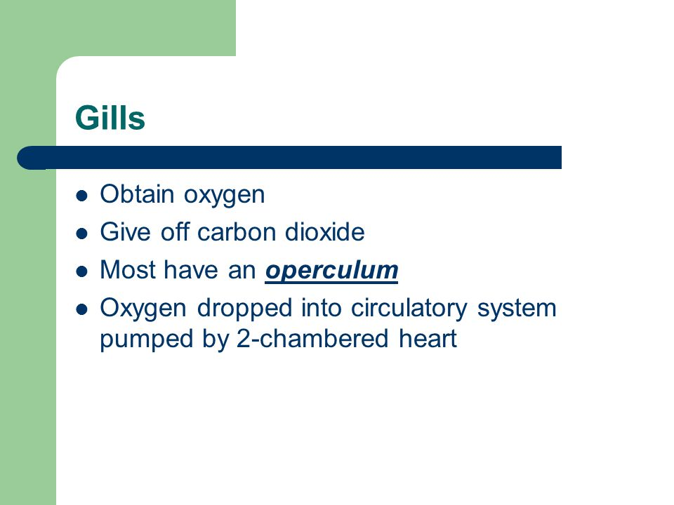 Gills Obtain oxygen Give off carbon dioxide Most have an operculum