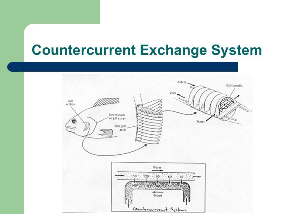 Countercurrent Exchange System