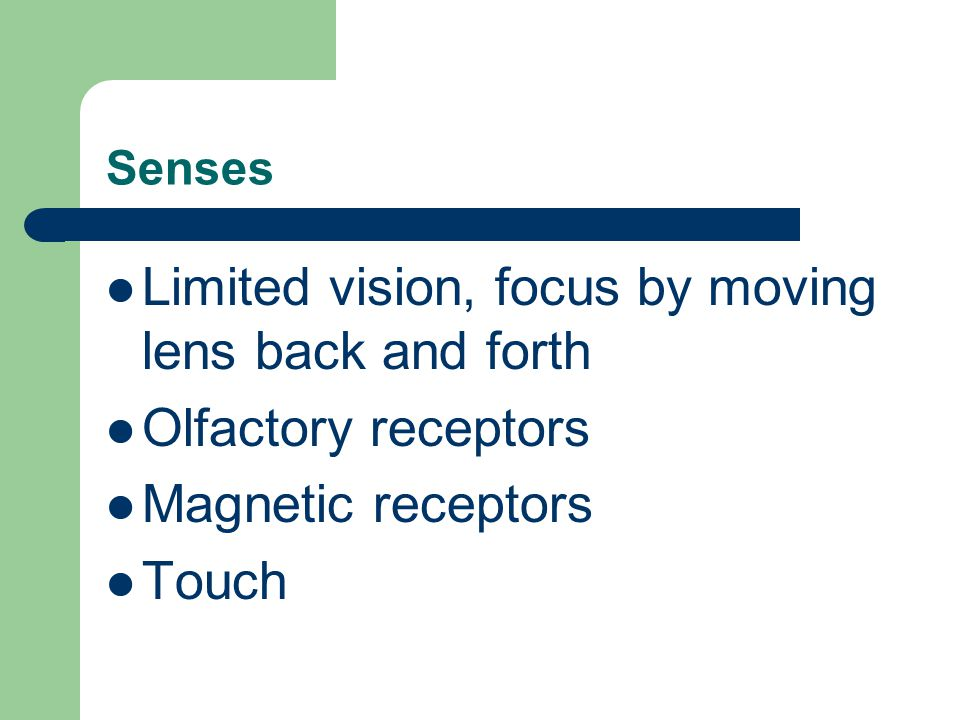 Limited vision, focus by moving lens back and forth