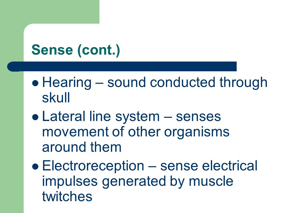 Sense (cont.) Hearing – sound conducted through skull. Lateral line system – senses movement of other organisms around them.