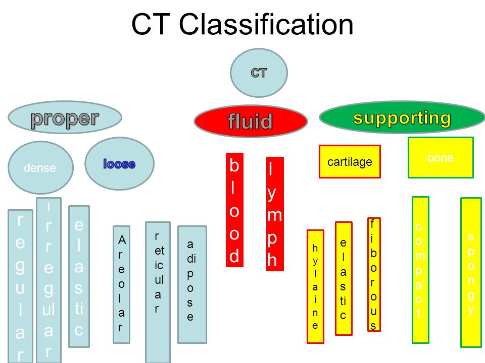 CT Classification proper fluid supporting blood lymph regular r