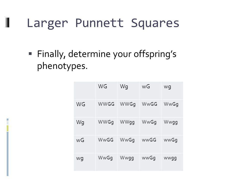 Larger Punnett Squares