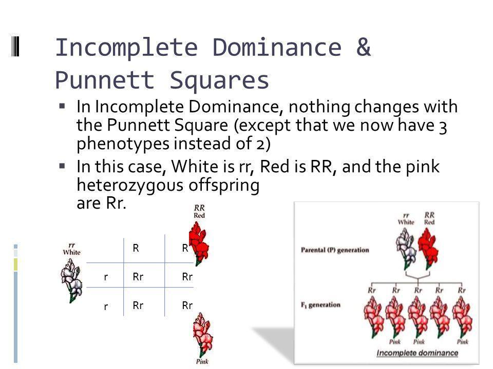 Incomplete Dominance & Punnett Squares