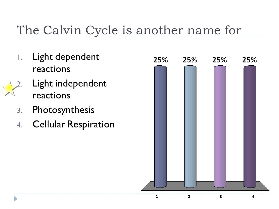 The Calvin Cycle is another name for