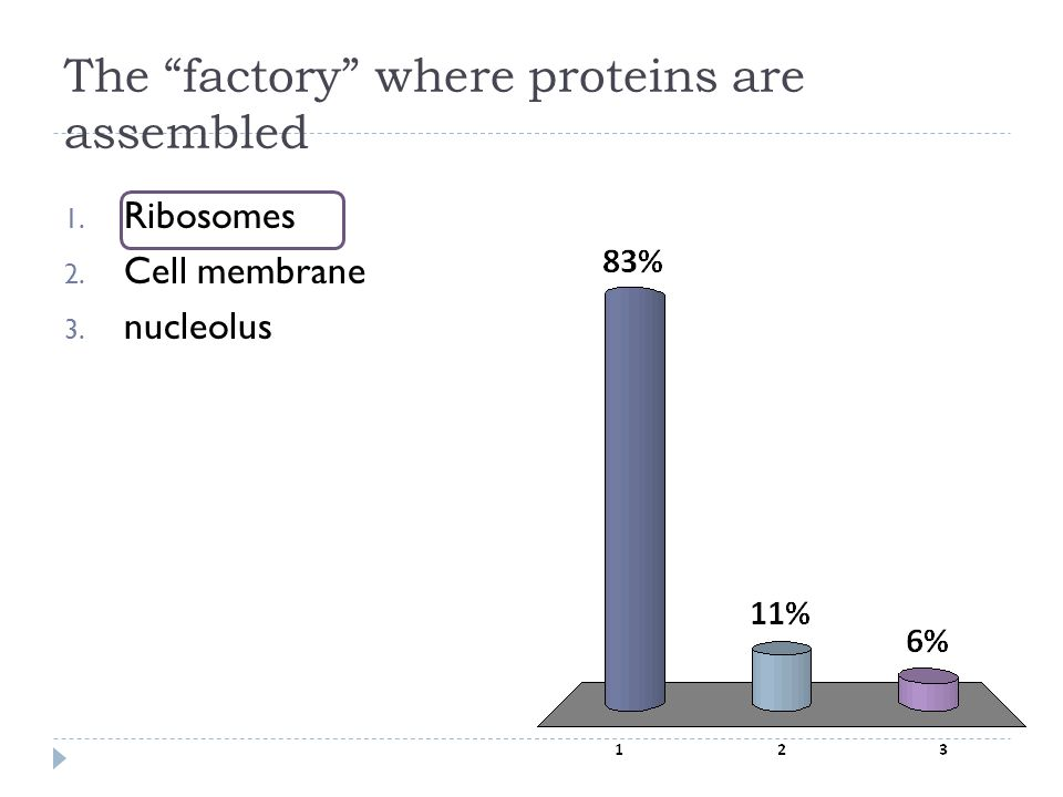 The factory where proteins are assembled