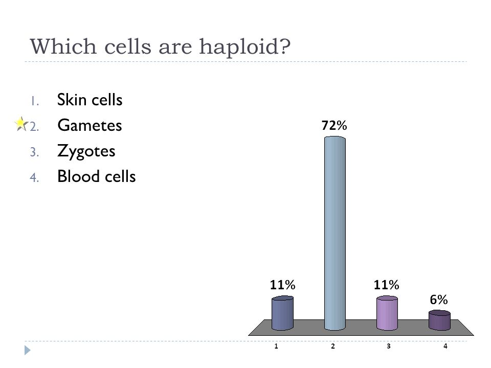 Which cells are haploid