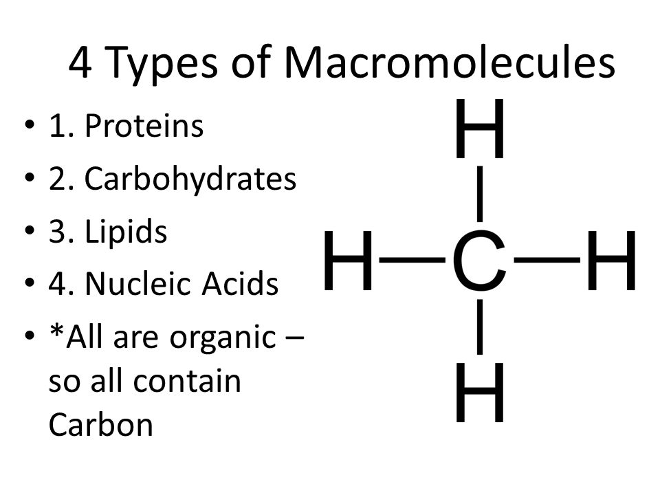 4 Types of Macromolecules