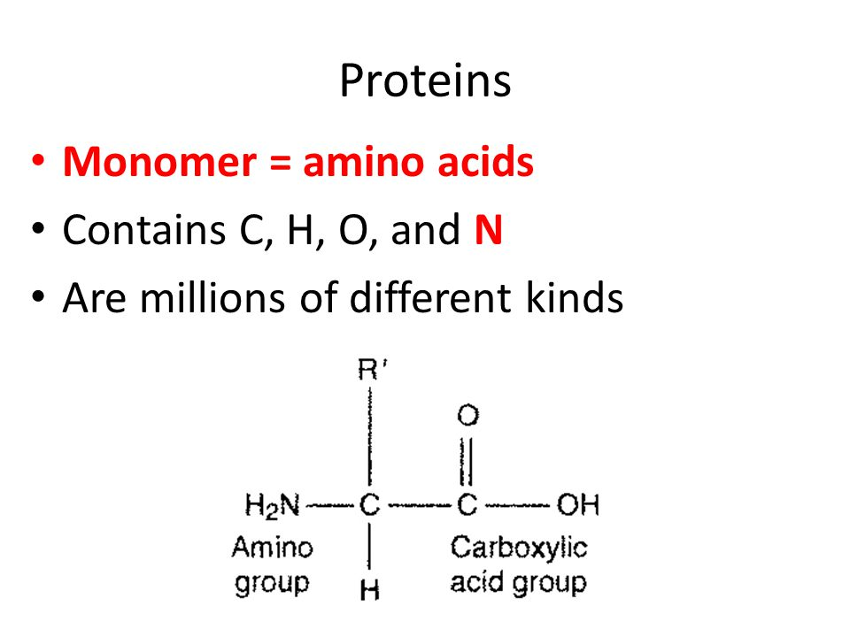 Proteins Monomer = amino acids Contains C, H, O, and N