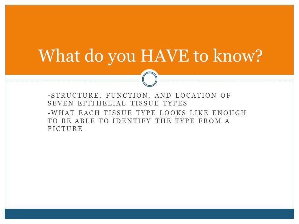 What do you HAVE to know -Structure, function, and location of seven epithelial tissue types.