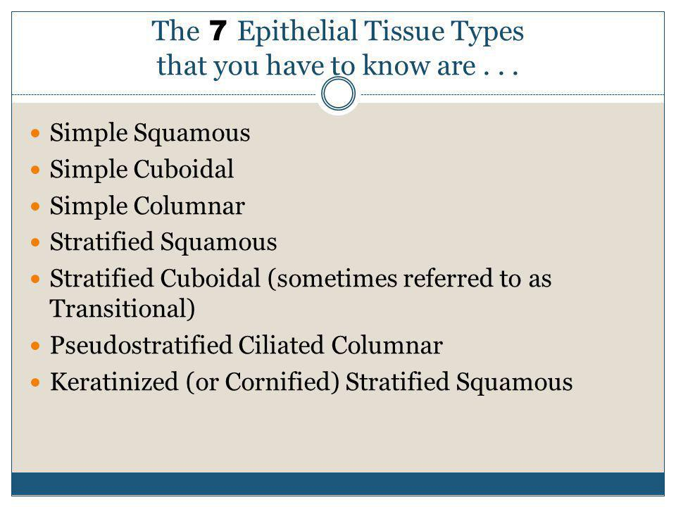 The 7 Epithelial Tissue Types that you have to know are . . .