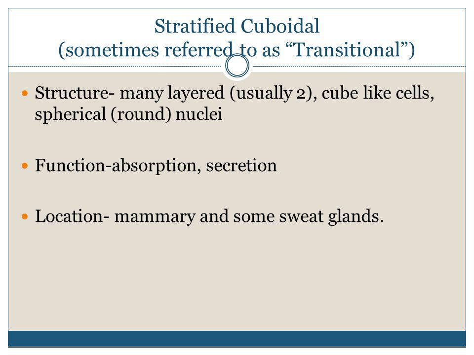Stratified Cuboidal (sometimes referred to as Transitional )