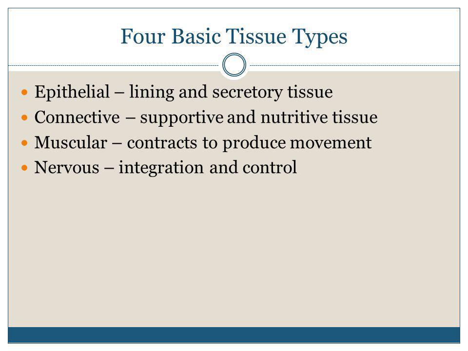 Four Basic Tissue Types
