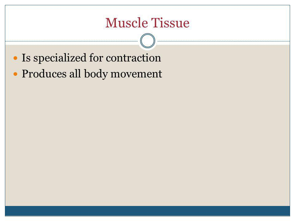 Muscle Tissue Is specialized for contraction