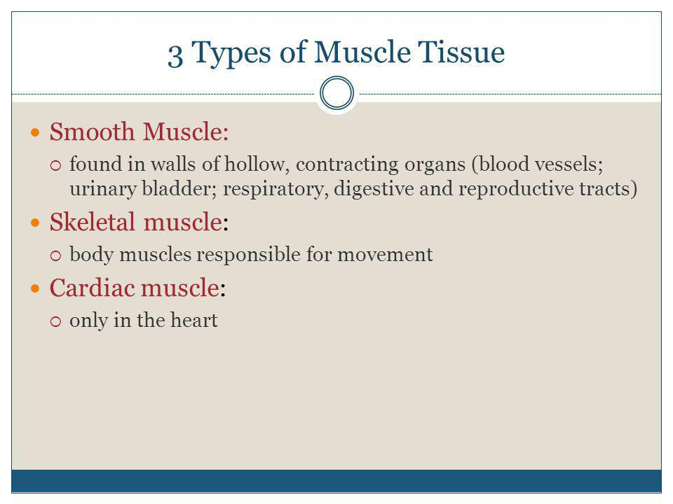 3 Types of Muscle Tissue Smooth Muscle: Skeletal muscle: