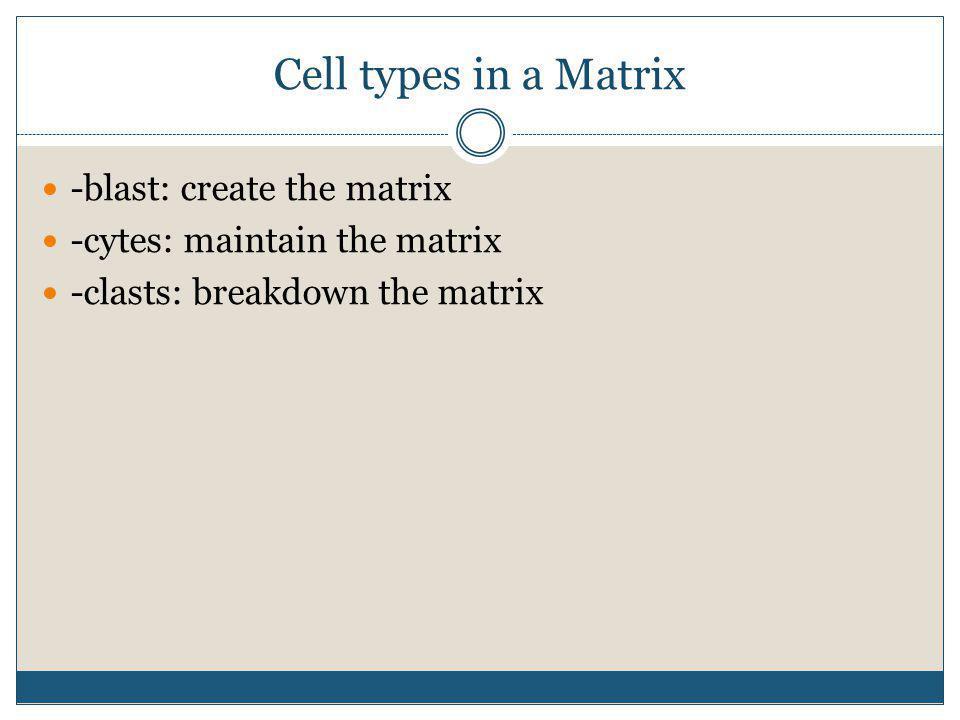 Cell types in a Matrix -blast: create the matrix