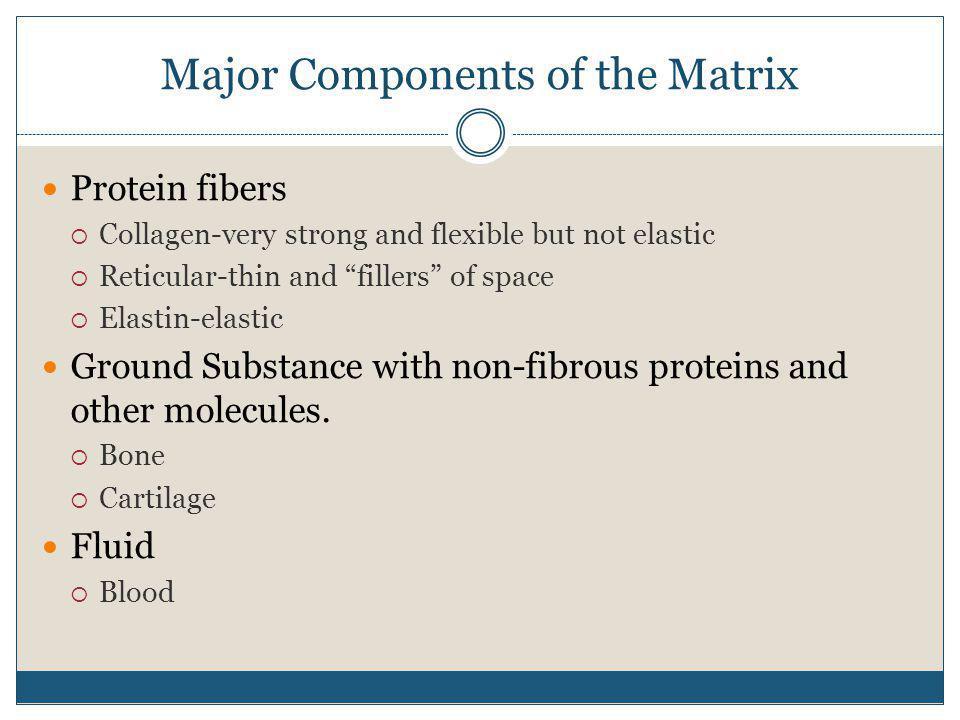 Major Components of the Matrix