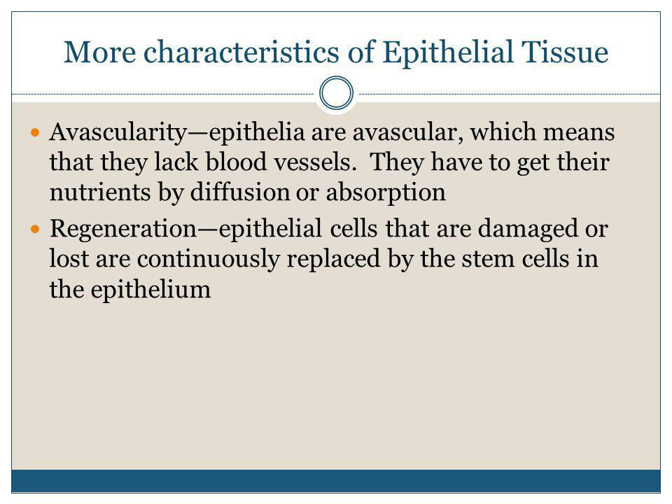More characteristics of Epithelial Tissue