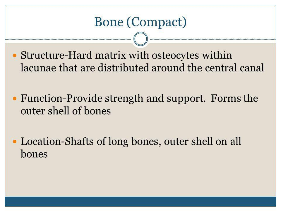 Bone (Compact) Structure-Hard matrix with osteocytes within lacunae that are distributed around the central canal.