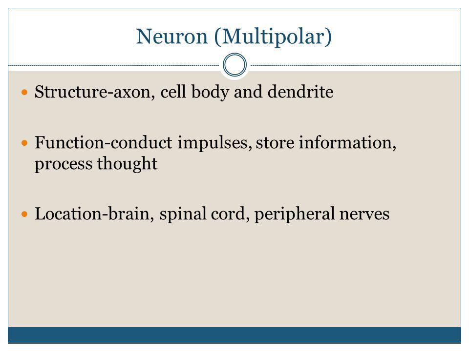 Neuron (Multipolar) Structure-axon, cell body and dendrite