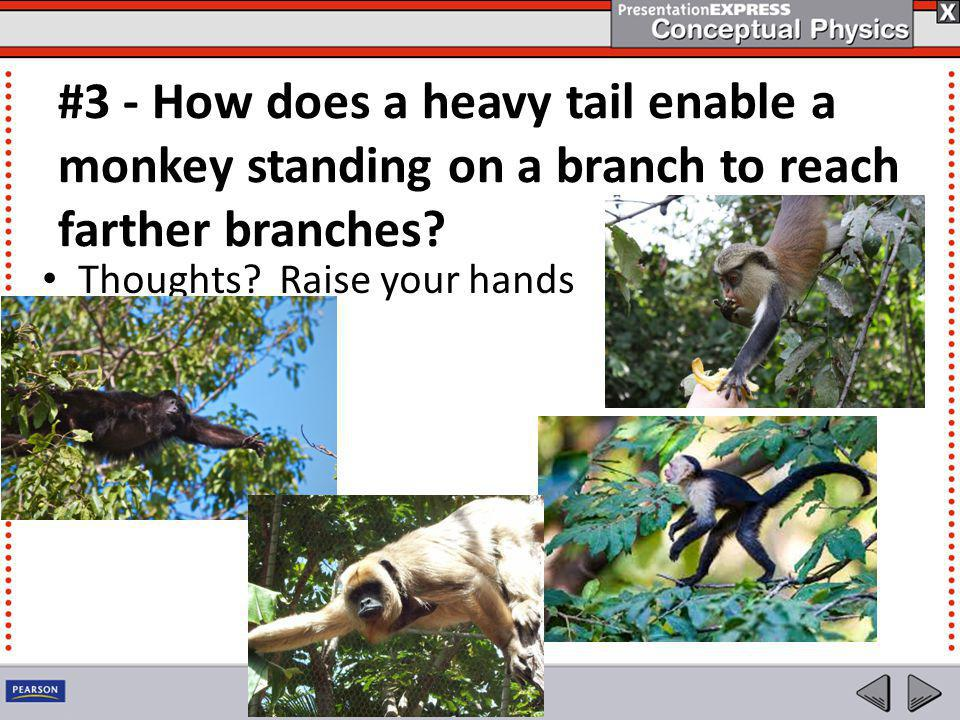 #3 - How does a heavy tail enable a monkey standing on a branch to reach farther branches