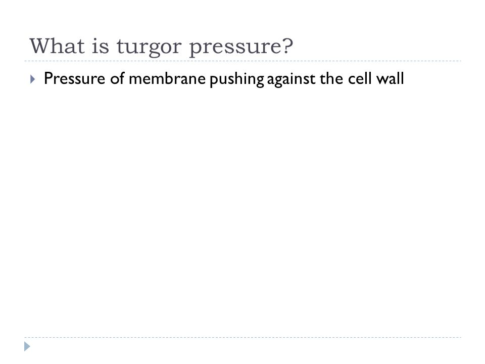 What is turgor pressure