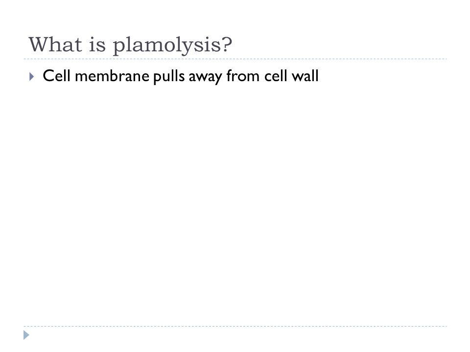 What is plamolysis Cell membrane pulls away from cell wall