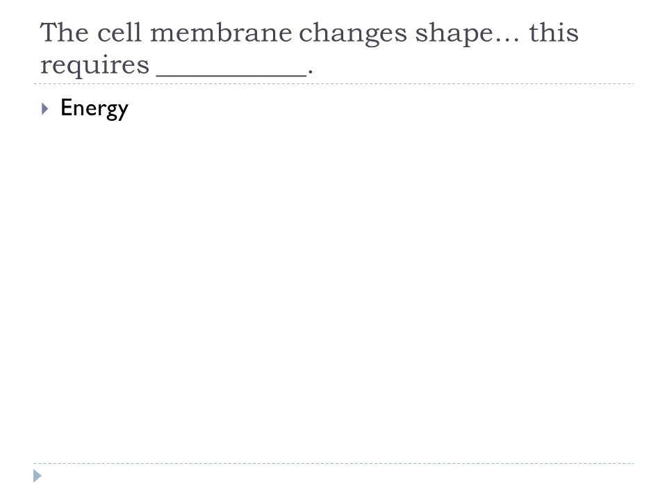 The cell membrane changes shape… this requires ___________.