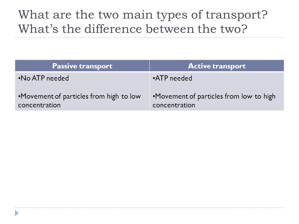 What are the two main types of transport