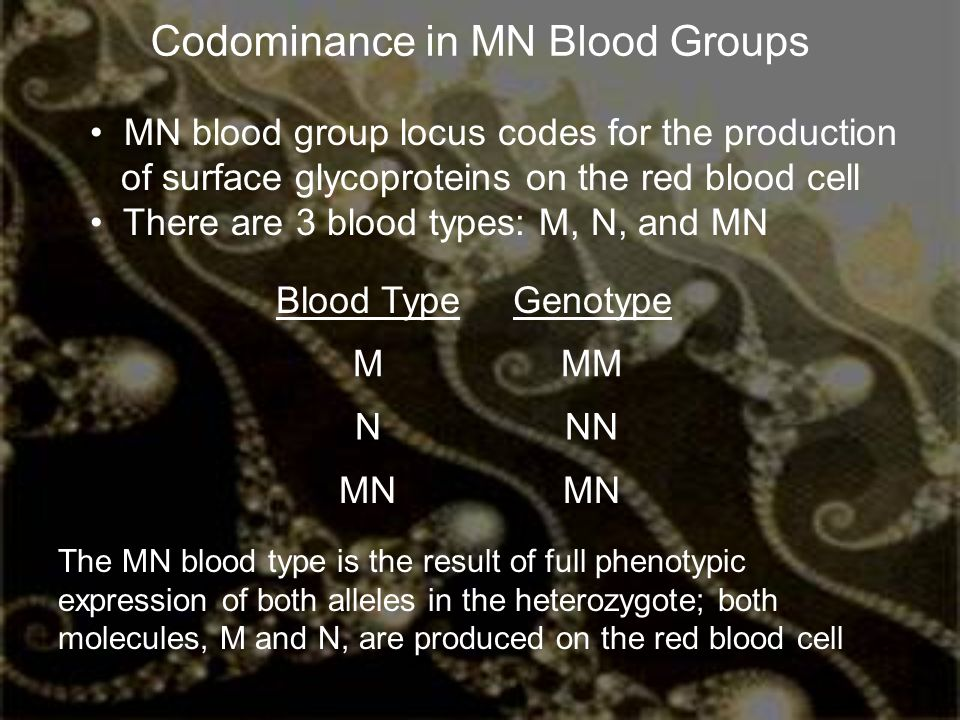 Codominance in MN Blood Groups