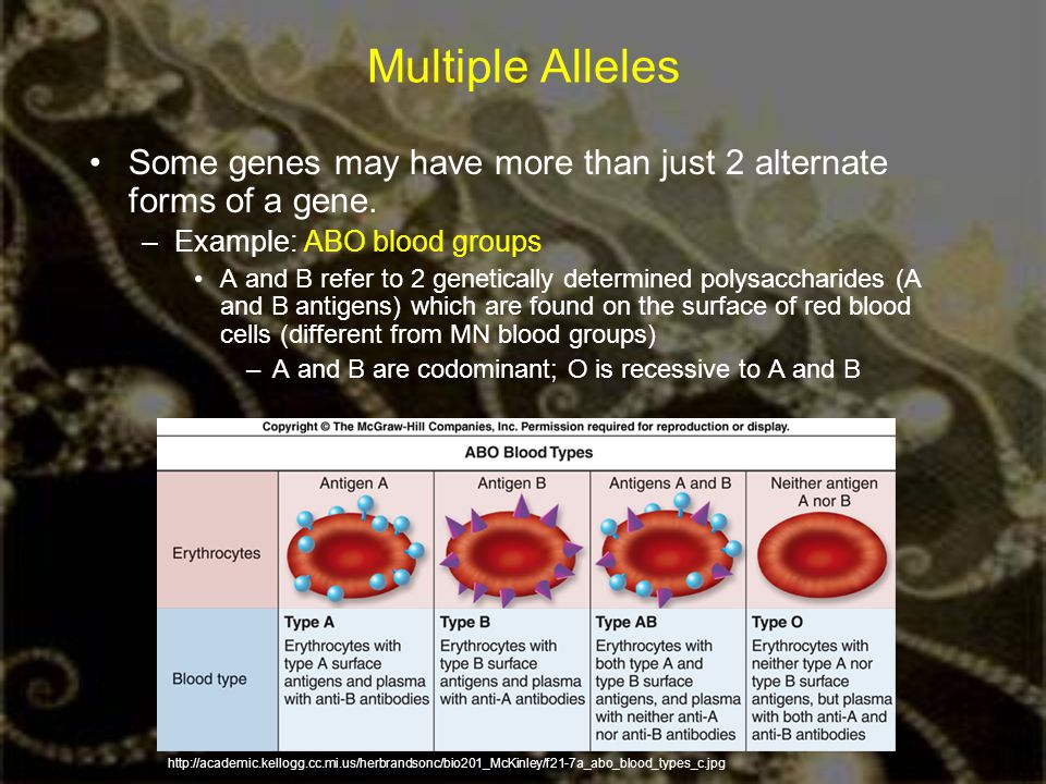 Multiple Alleles Some genes may have more than just 2 alternate forms of a gene. Example: ABO blood groups.