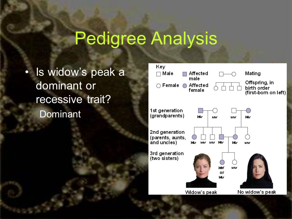 Pedigree Analysis Is widow's peak a dominant or recessive trait