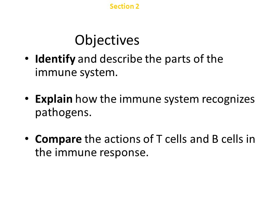 Objectives Identify and describe the parts of the immune system.