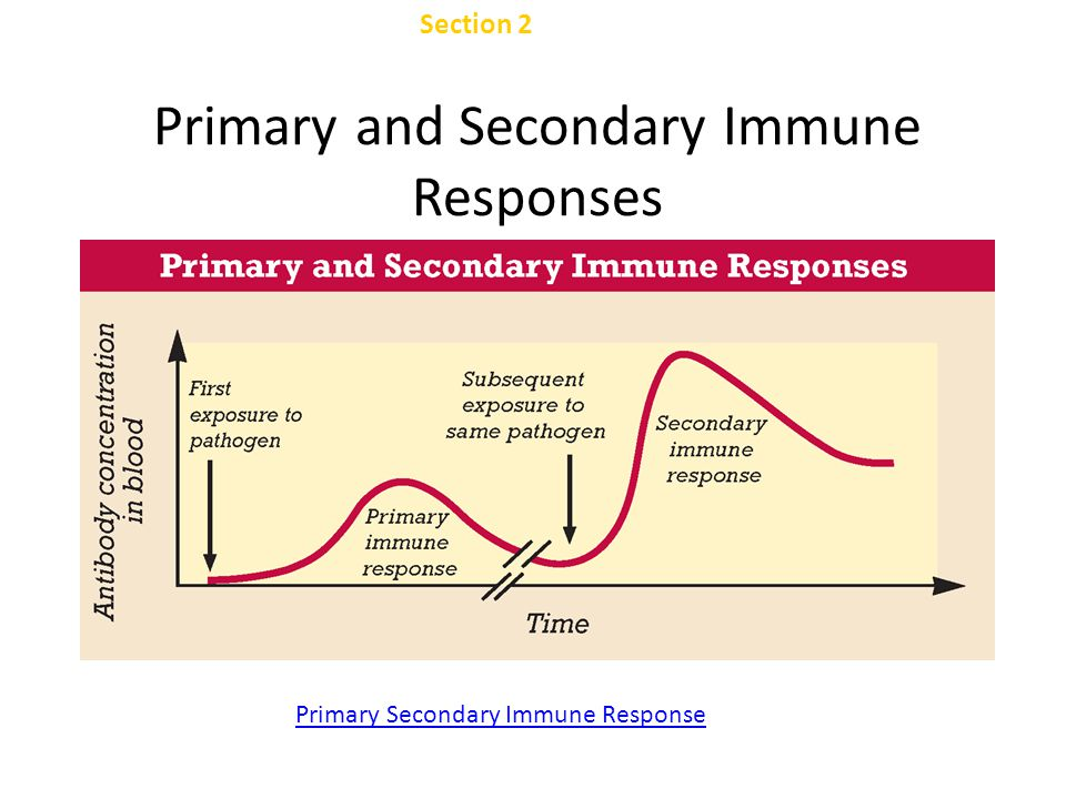 Primary and Secondary Immune Responses