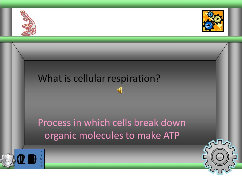 Process in which cells break down organic molecules to make ATP