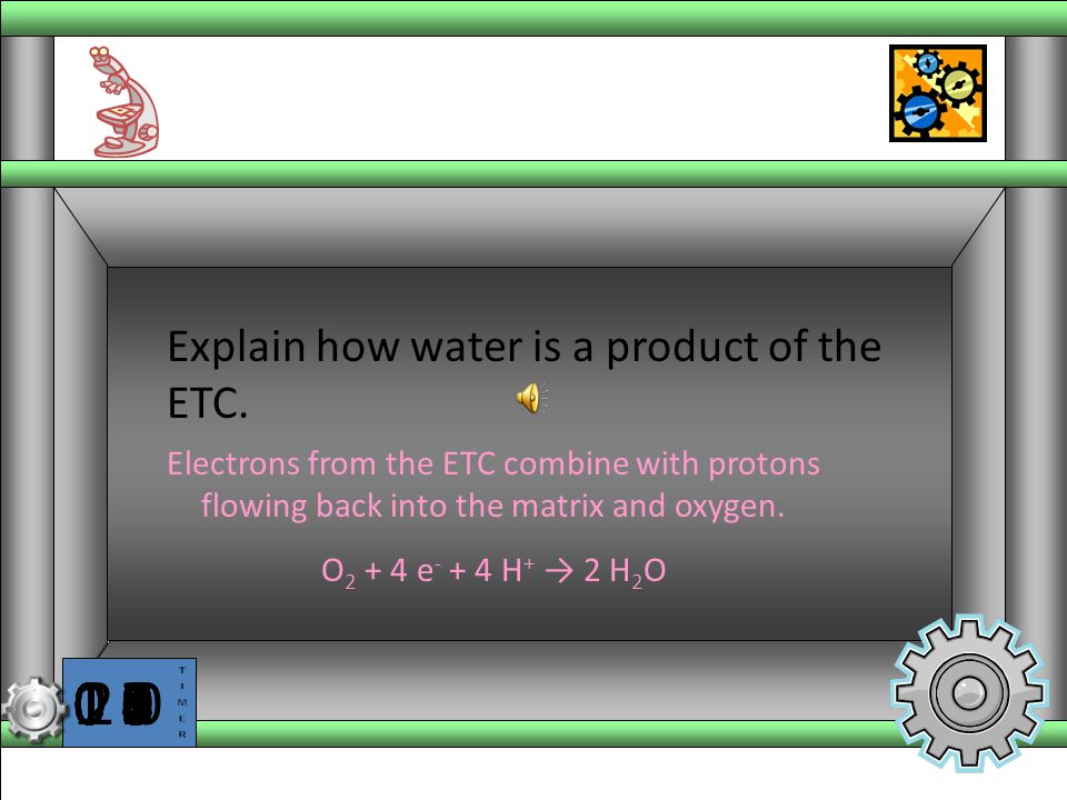 Explain how water is a product of the ETC.