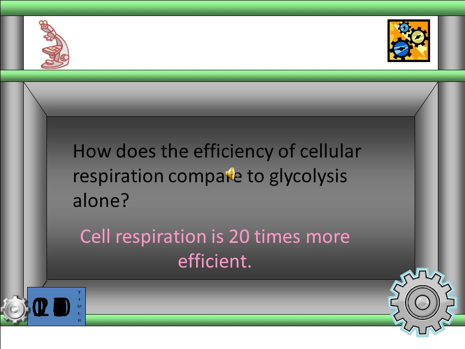 Cell respiration is 20 times more efficient.