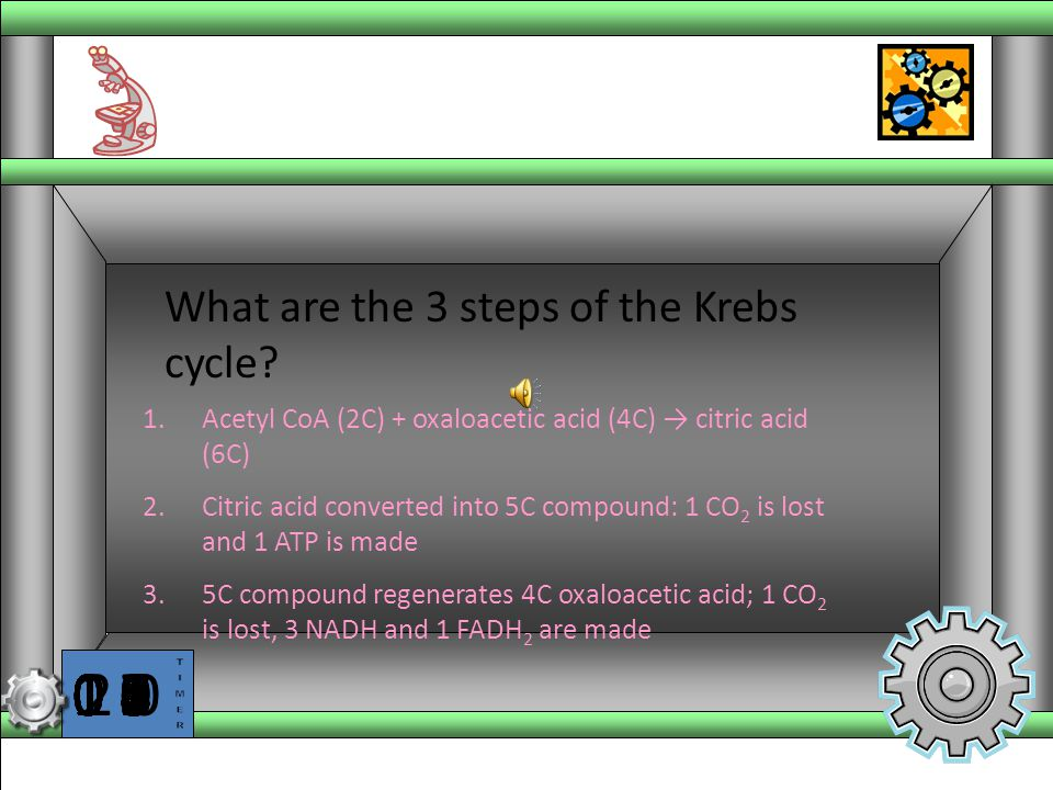 What are the 3 steps of the Krebs cycle