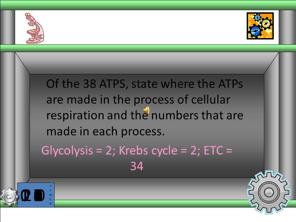 Glycolysis = 2; Krebs cycle = 2; ETC = 34