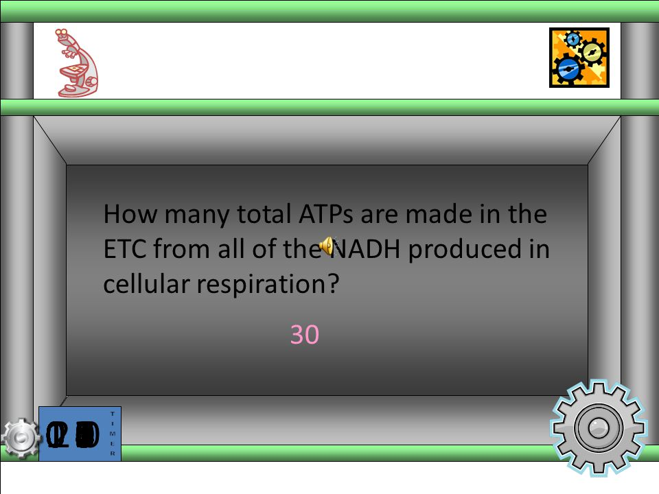 How many total ATPs are made in the ETC from all of the NADH produced in cellular respiration